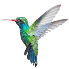 Bird-240